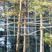 Seoul Pine